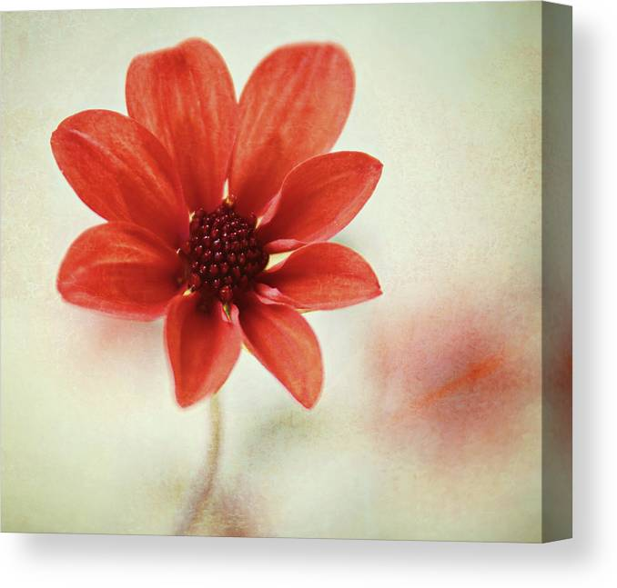 Orange Color Canvas Print featuring the photograph Pretty Orange Flower by Captured By Karen Photography