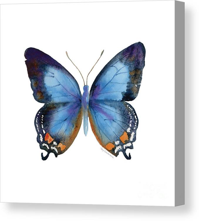 Imperial Blue Butterfly Canvas Print featuring the painting 80 Imperial Blue Butterfly by Amy Kirkpatrick