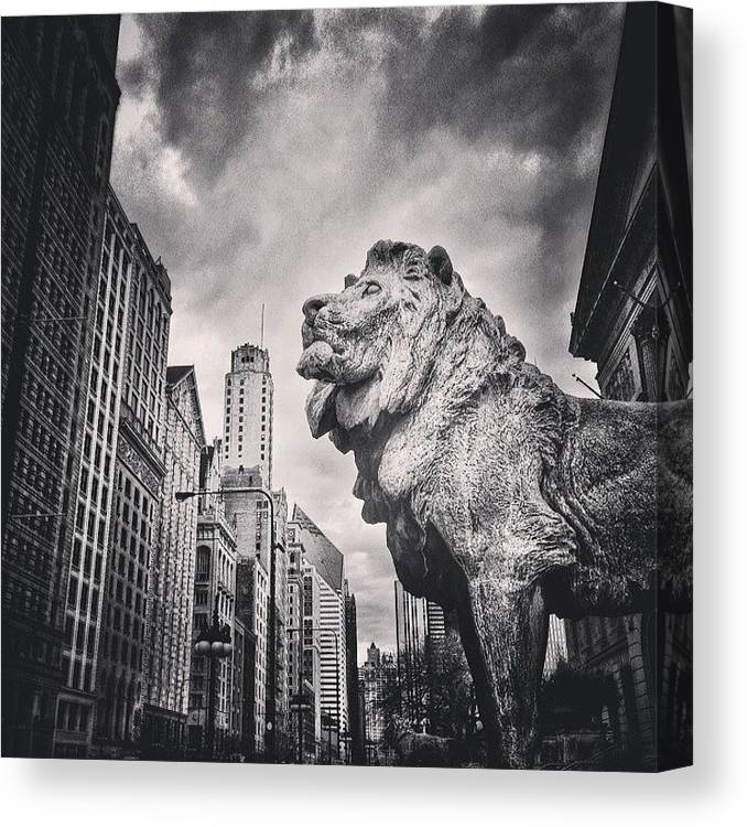 America Canvas Print featuring the photograph Art Institute of Chicago Lion Picture by Paul Velgos