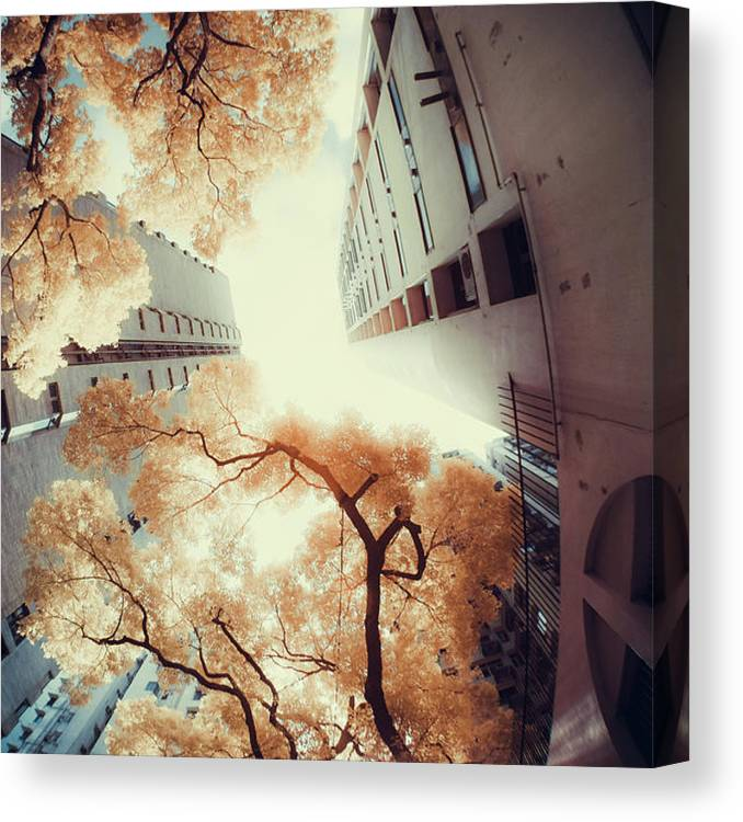 Tranquility Canvas Print featuring the photograph City In Harmony With Nature by D3sign