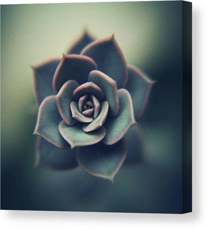 Outdoors Canvas Print featuring the photograph Echeveria Macro by Con Ryan