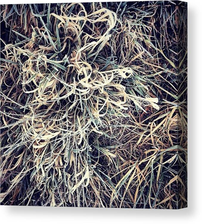 Grass Canvas Print featuring the photograph Frozen Grasses by Nic Squirrell