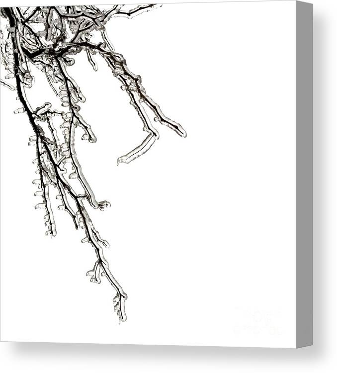Ice Canvas Print featuring the photograph Ice on branches by Blink Images