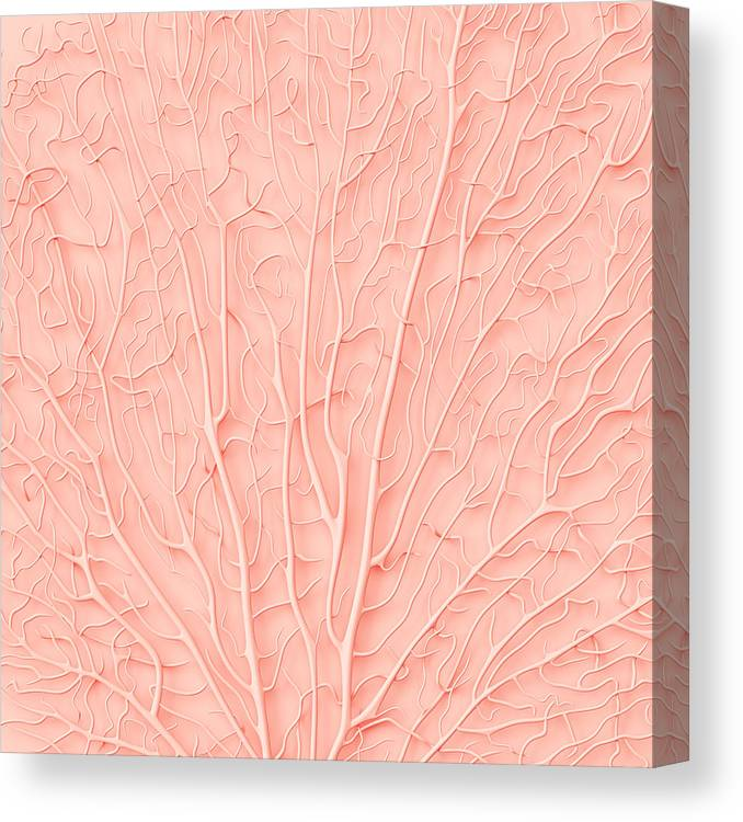 Empty Canvas Print featuring the photograph Living Coral Color Of The Year 2019 by Artjafara
