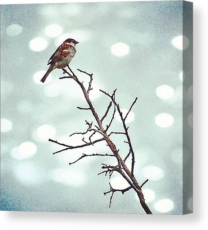 Life Canvas Print featuring the photograph #mgmarts #bird #nature #life #bestpic by Marianna Mills