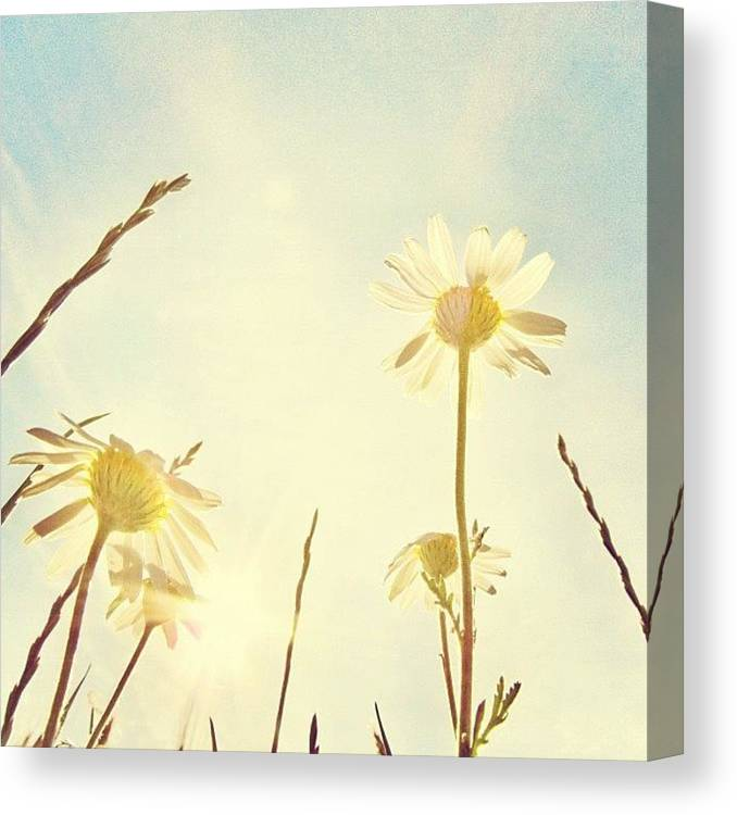 Summer Canvas Print featuring the photograph #mgmarts #daisy #all_shots #dreamy by Marianna Mills
