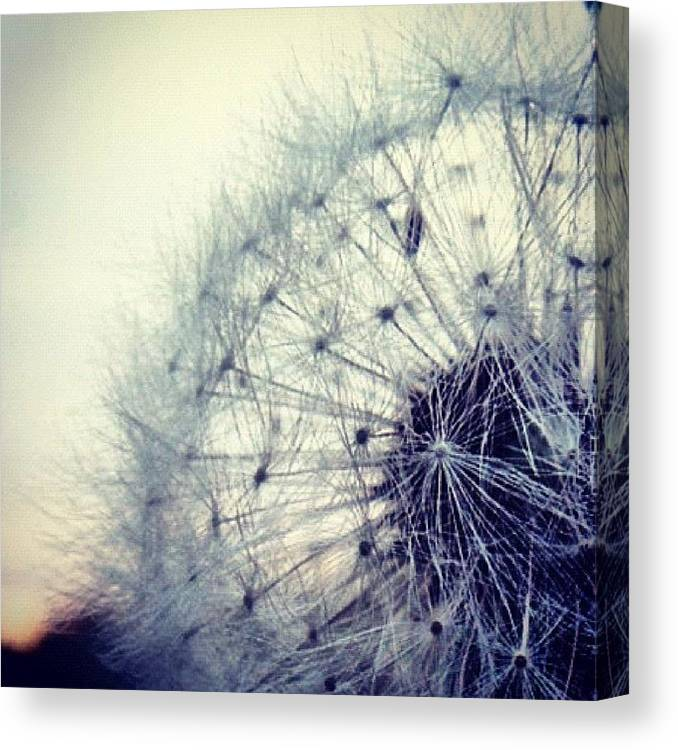 Life Canvas Print featuring the photograph #mgmarts #dandelion #love #micro by Marianna Mills