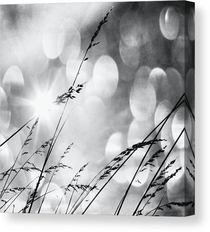 Life Canvas Print featuring the photograph #mgmarts #grass #weed #wind #field by Marianna Mills