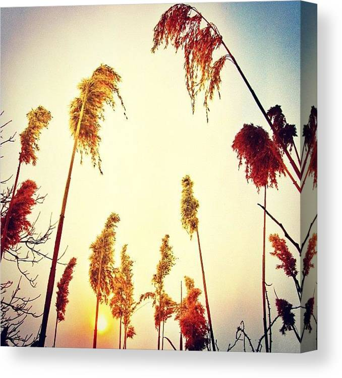 Beautiful Canvas Print featuring the photograph #mgmarts #sunset #bright #beautiful by Marianna Mills