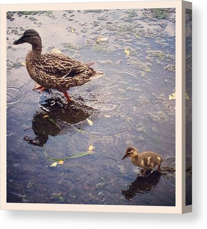 Water Canvas Print featuring the photograph Playing in Water by Mike Maher