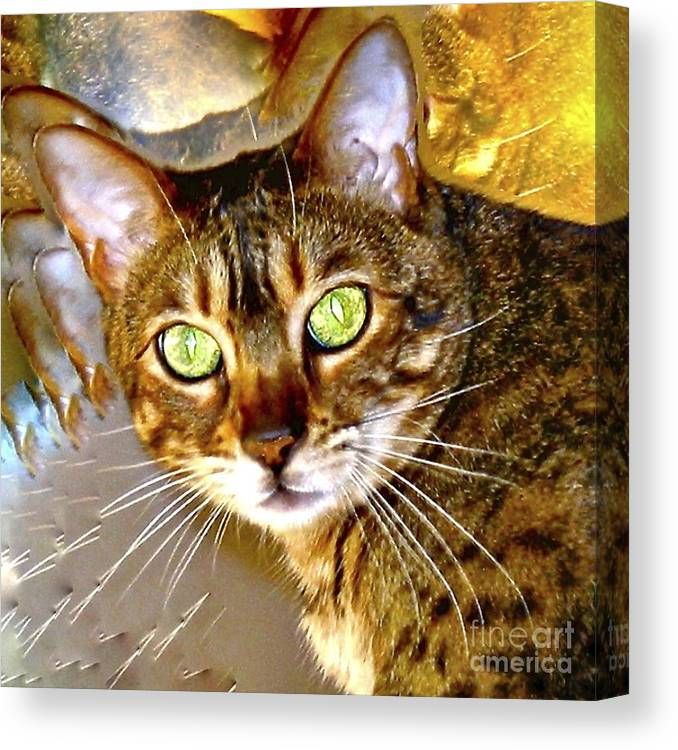 Bengal Cat Canvas Print featuring the photograph Say What by Phyllis Kaltenbach