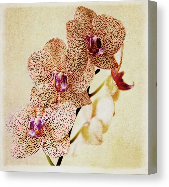 Petal Canvas Print featuring the photograph Spotted Orchid by Image By Sherry Galey