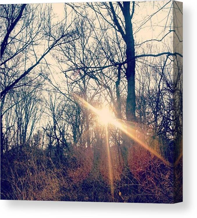 Photooftheday Canvas Print featuring the photograph Sunlight Through The Trees by Genevieve Esson