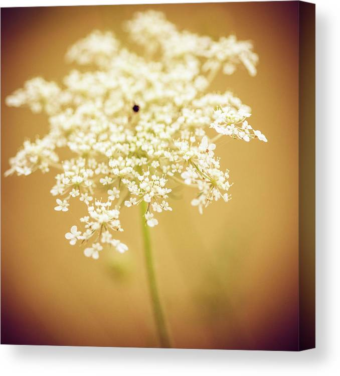 Creativity Canvas Print featuring the photograph Wildflower by Jeja
