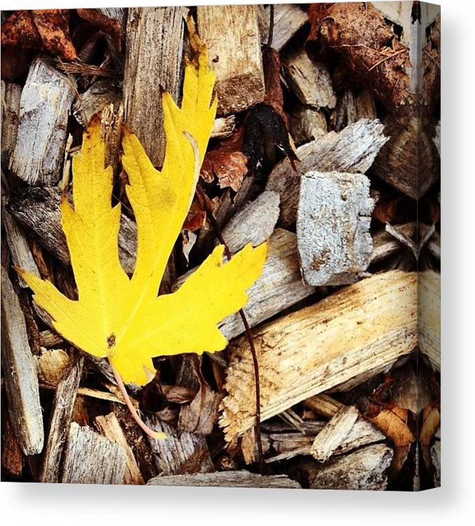 Leaf Canvas Print featuring the photograph Yellow Leaf by Christy Beckwith