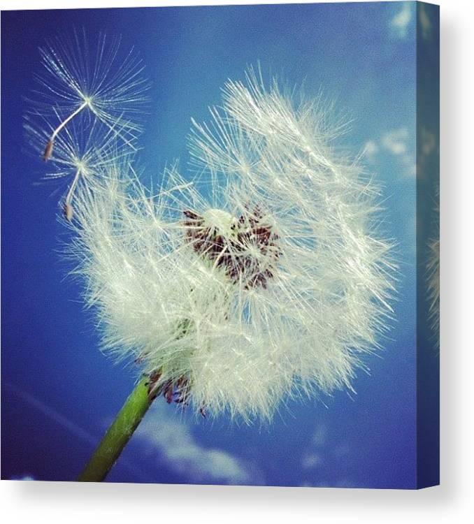 Dandelion Canvas Print featuring the photograph Dandelion and blue sky by Matthias Hauser