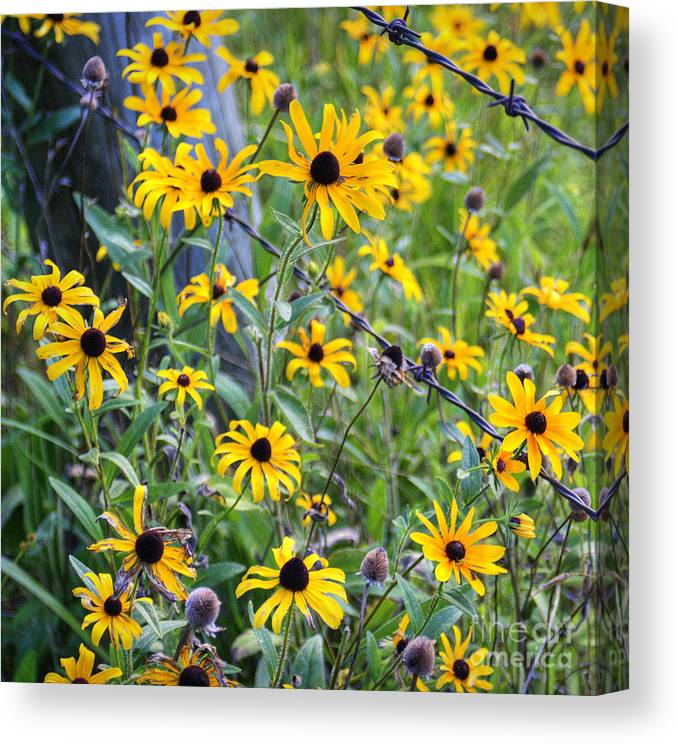Fence Canvas Print featuring the photograph Fence Row Flowers by Pete Hellmann