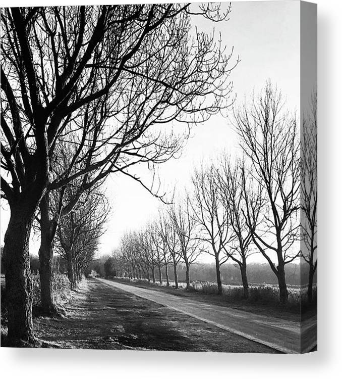 Natureonly Canvas Print featuring the photograph Lady Anne's Drive, Holkham by John Edwards