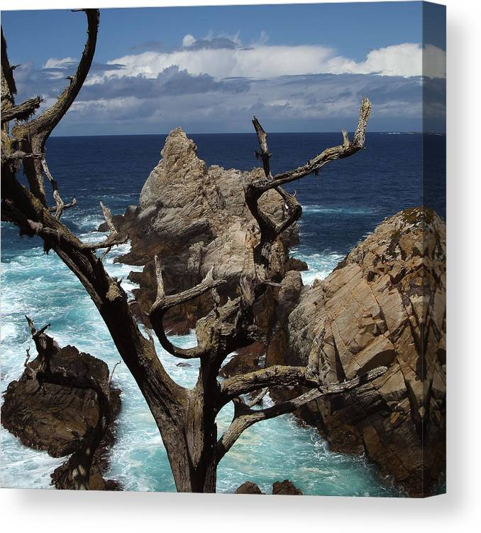 Carmel Canvas Print featuring the photograph Point Lobos Rocks and Branches by Charlene Mitchell