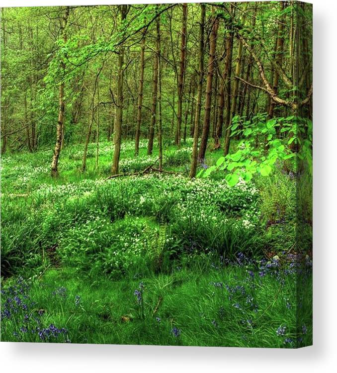 Nature Canvas Print featuring the photograph Ramsons And Bluebells, Bentley Woods by John Edwards