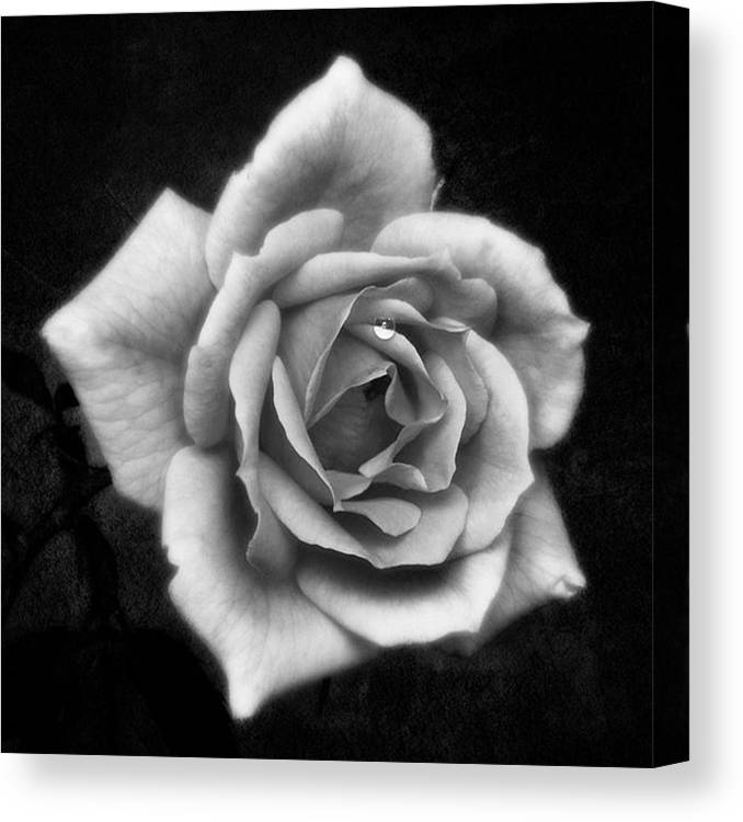 Beautiful Canvas Print featuring the photograph Rose In Mono. #flower #flowers by John Edwards