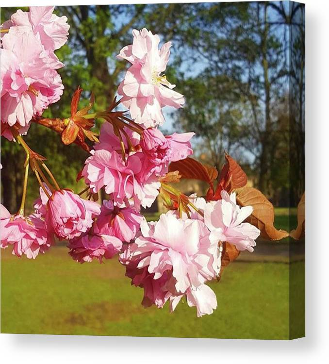 Spring Canvas Print featuring the photograph This Sun Has Really Brought Out The by Dante Harker