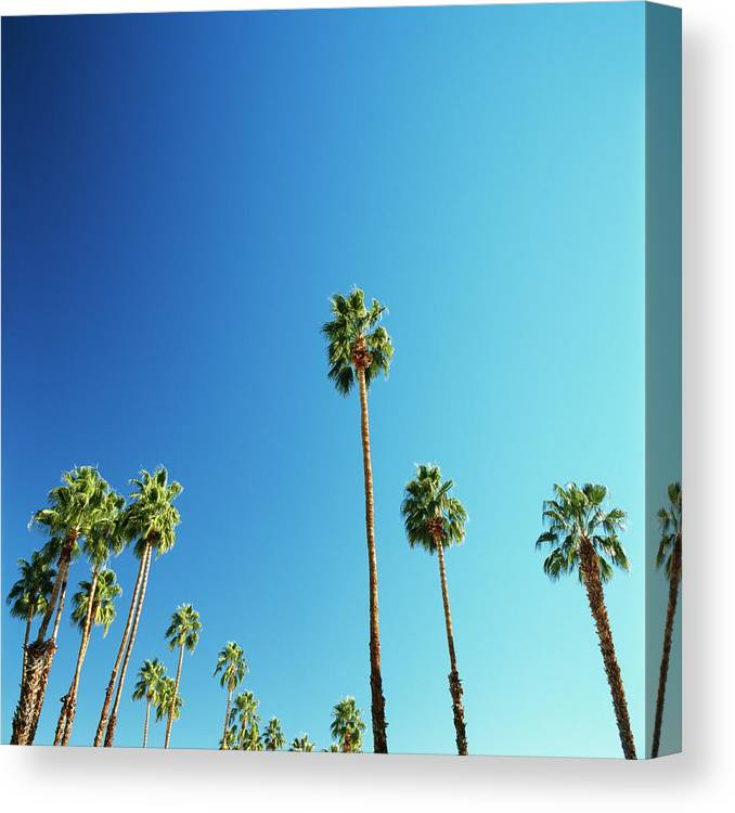 Clear Sky Canvas Print featuring the photograph Palm Trees Against Blue Sky by Micha Pawlitzki