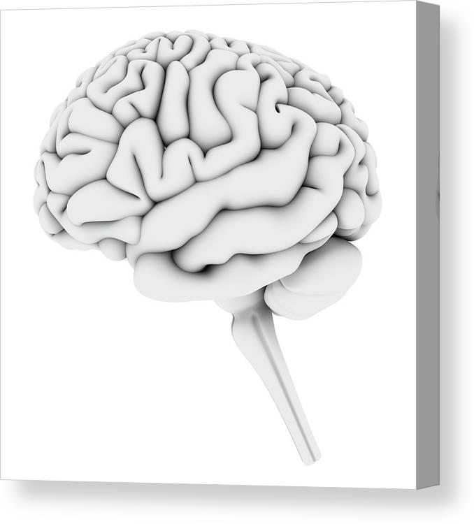 White Background Canvas Print featuring the digital art Brain, Artwork by Pasieka