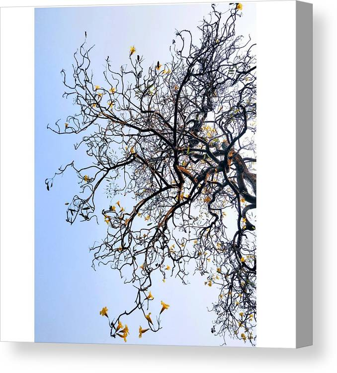 Autumn Canvas Print featuring the photograph Autumn by Priya Hazra