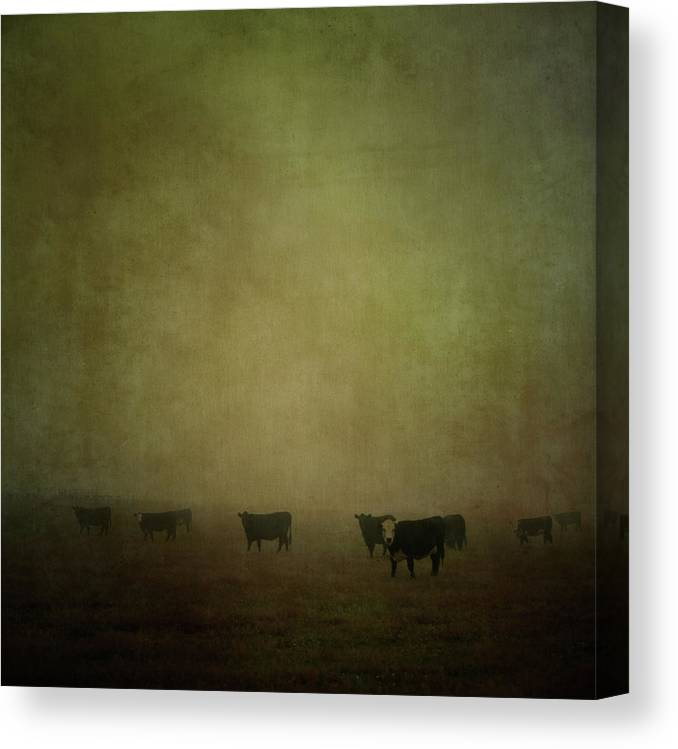 Pets Canvas Print featuring the photograph Cattle In The Mist by Jill Ferry