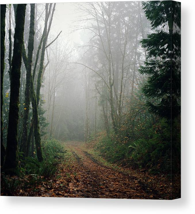 Tranquility Canvas Print featuring the photograph Dirt Road Leading Through Foggy Forest by Danielle D. Hughson