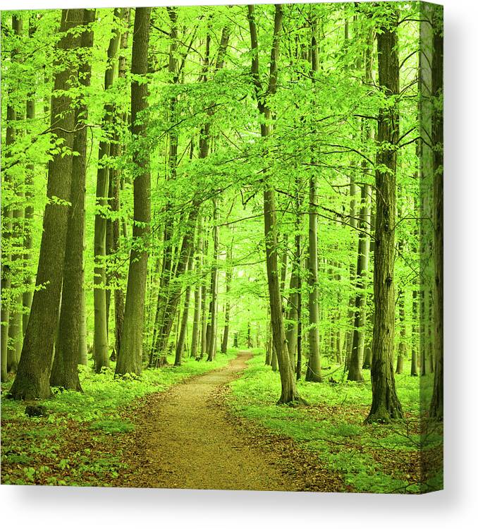 Curve Canvas Print featuring the photograph Forest Path by Nikada