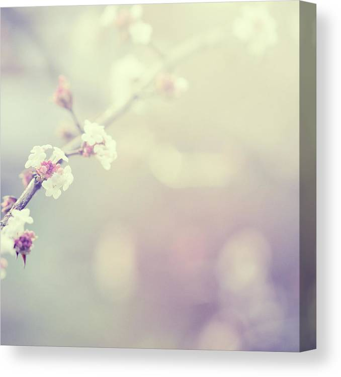 Silence Canvas Print featuring the photograph Little Flowers In Winter by Rike
