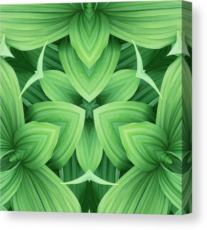 Symmetry Canvas Print featuring the photograph Mandala 3 by Steve Satushek
