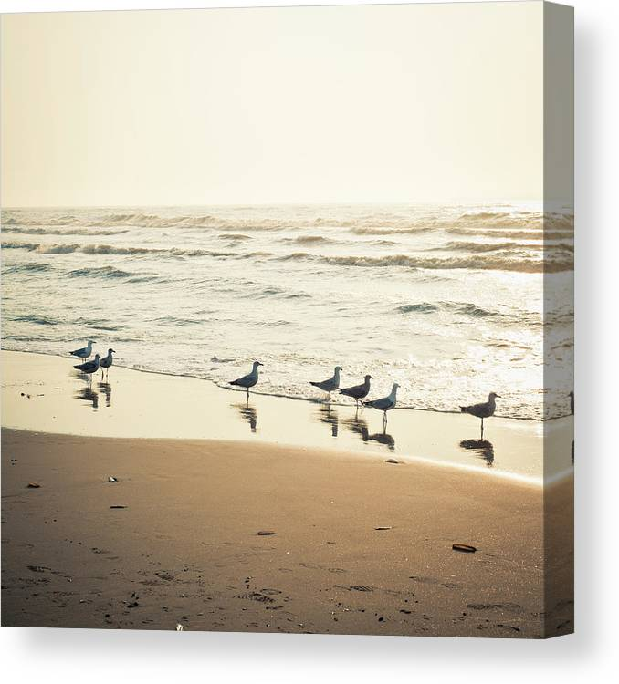 Seagulls On The Seashore At Sunset Canvas Print Canvas Art By Cirano83