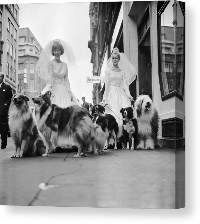Wedding Dress Canvas Print featuring the photograph Soho Sheep Dogs by Ronald Dumont