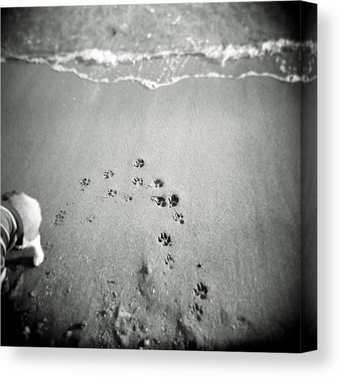 Pets Canvas Print featuring the photograph The Beach by Moaan