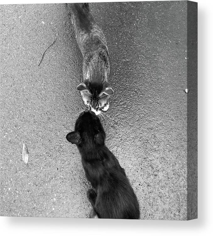 Pets Canvas Print featuring the photograph Two Kittens Which Kiss by Photographer, Loves Art, Lives In Kyoto