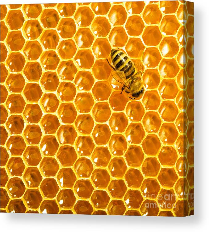 Bee Canvas Print featuring the photograph Working Bee On Honeycells by Studiosmart