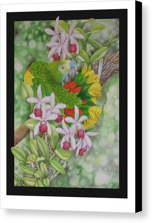 Orchids Canvas Print featuring the painting Amazon 3 by Darren James Sturrock