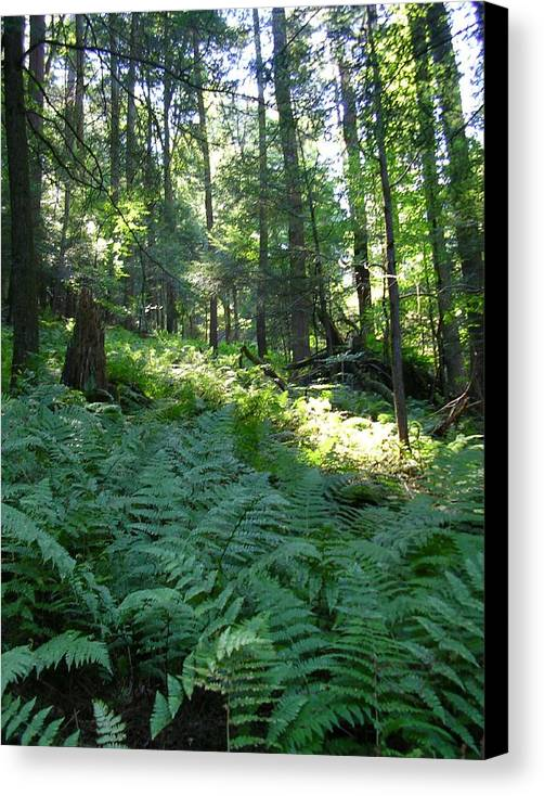 Ferns Canvas Print featuring the photograph Fields Of Ferns by Tracy Crawford