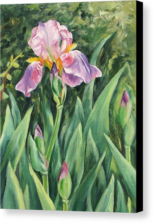 Irises Canvas Print featuring the painting Irises by Cheryl Pass