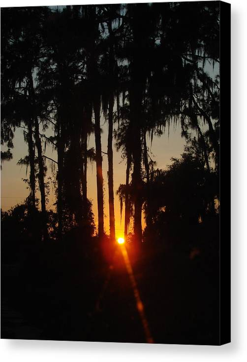 Sunset Canvas Print featuring the photograph Sunset In The Woods by Kimberly Camacho