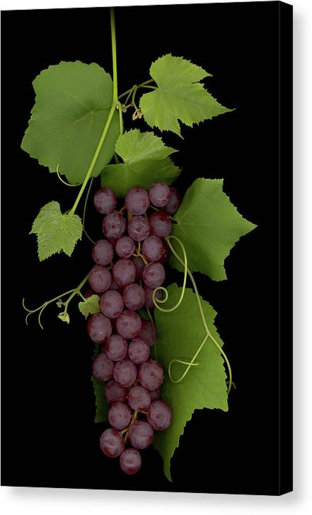 Grapes Canvas Print featuring the mixed media Fruit Of The Vine by Sandi F Hutchins