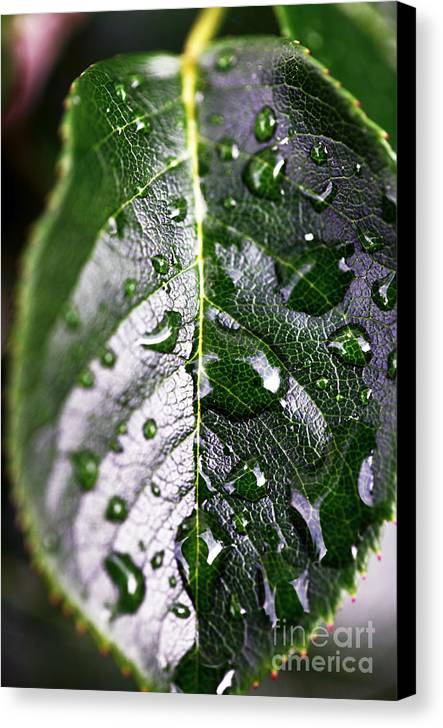 Split Leaf Canvas Print featuring the photograph Split Leaf by John Rizzuto