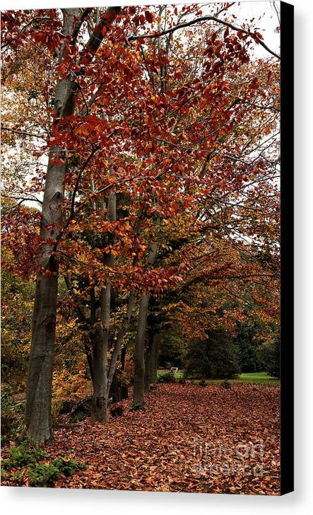 Path Of Leaves Canvas Print featuring the photograph Path Of Leaves by John Rizzuto