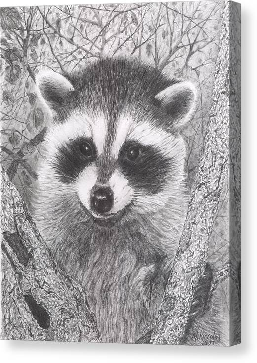Raccoon Canvas Print featuring the drawing Raccoon Kit by Marlene Piccolin