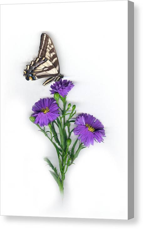Aster Flower Canvas Print featuring the mixed media Aster and Butterfly by Sandi F Hutchins