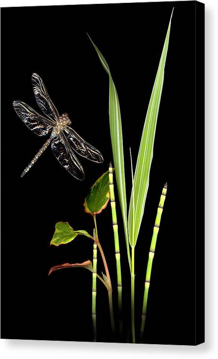Dragonfly Canvas Print featuring the photograph Dragonfly Wings by Sandi F Hutchins