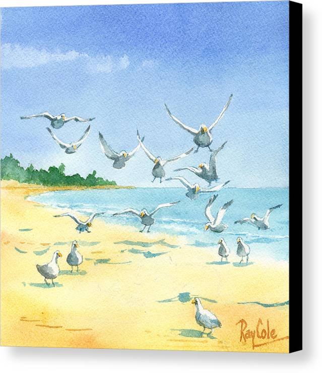 Seagulls Canvas Print featuring the painting Seagulls by Ray Cole